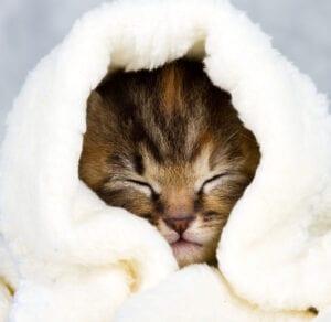 GM206 SVC Towel Blanket Donations - Image